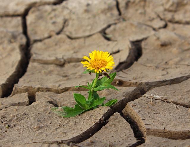 Storie di ordinaria resilienza - Psicologa Nunzia Rinaldi - Putignano - www.psicologanunziarinaldi.it